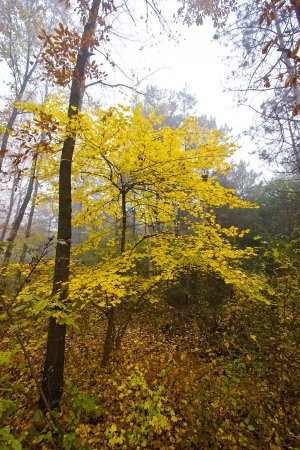 trees_fall_foliage